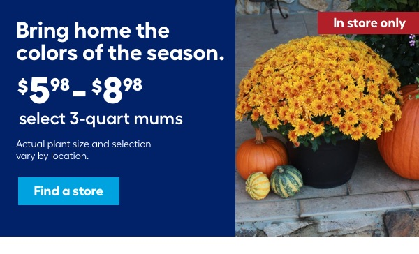 Bring home the colors of the season. $5.98- $8.98 select 3-quart mums. Actual plant size and selection vary by location. In store only.