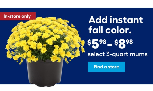 Add instant fall color. $5.98 - $8.98 select 3-quart mums.