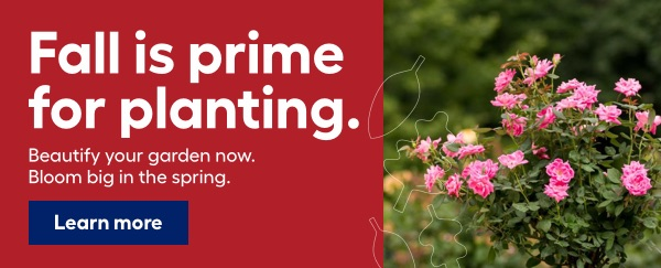 Fall is prime for planting. Beautify your garden now. Bloom big in the spring.